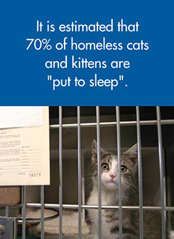 It is esimated that 70% of homeless cats and kittens are 'put to sleep'